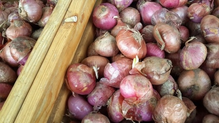 How to Grow Organic Onions 6