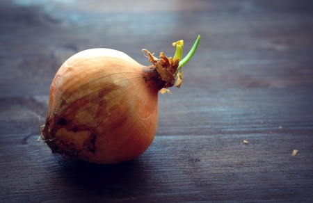 How to grow onions 8