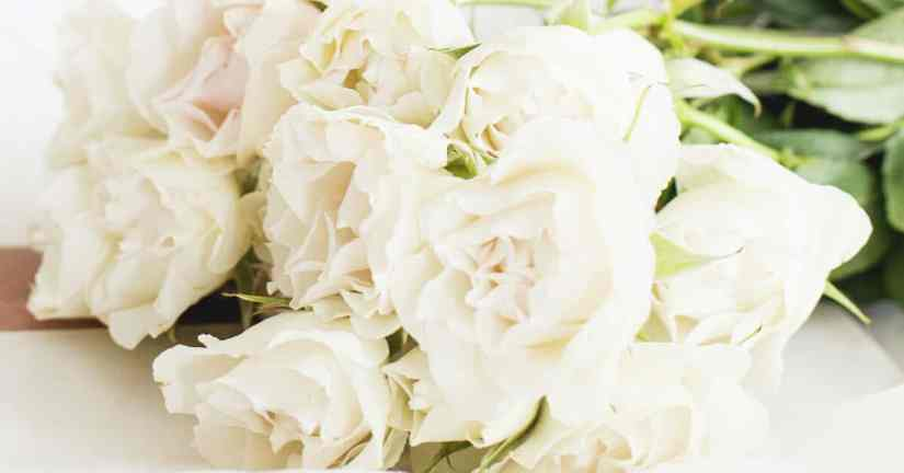 closeup bouquet of pale pink roses