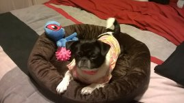 annabelle-chillin-in-her-new-bed-with-her-pet-treater-toys