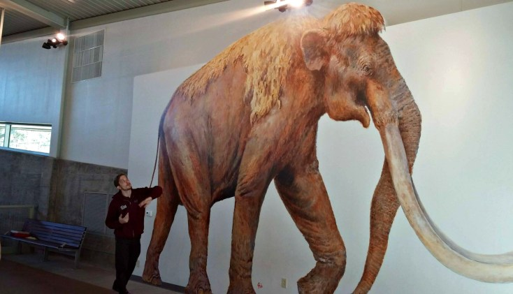 mammoth museum nov 2014 pic 4