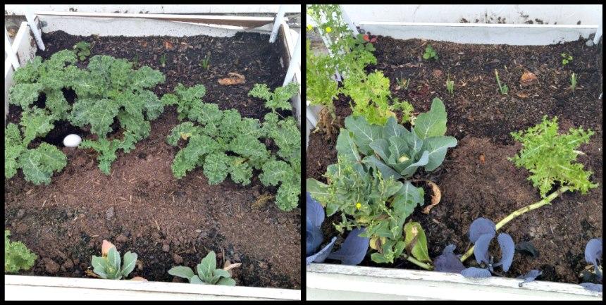 raised bed garden dec 2015