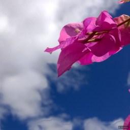 Lovely Day [#DP365]