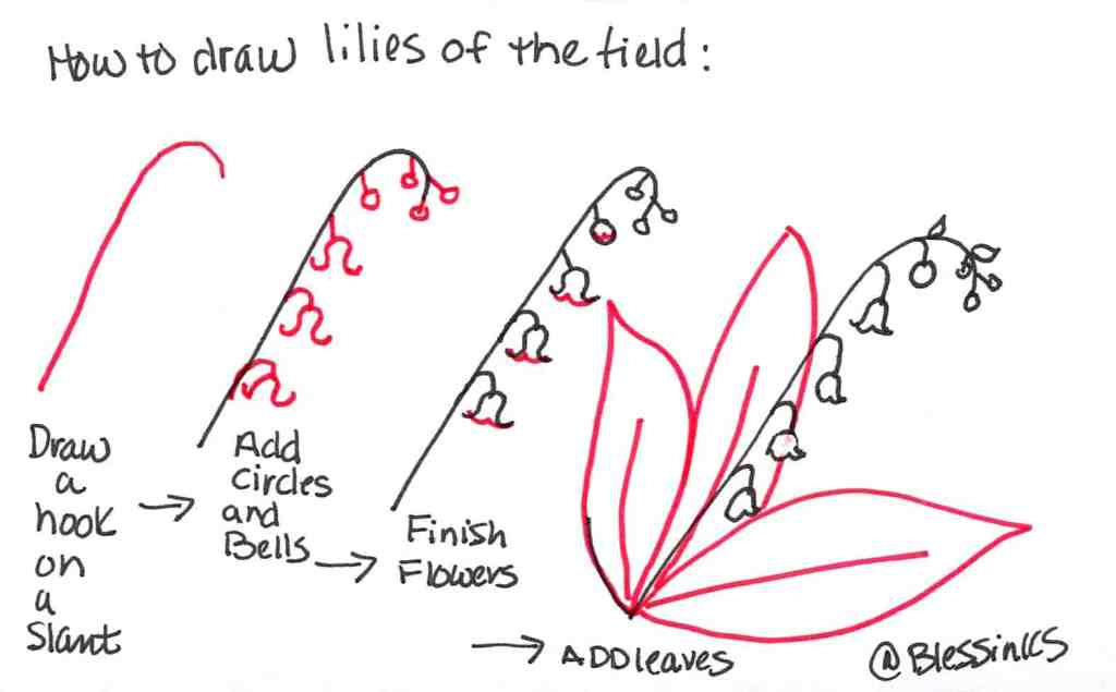 how to draw lilies of the field
