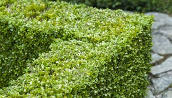 Top 10 Shrubs With Fall Berries To Add To Your Front Yard
