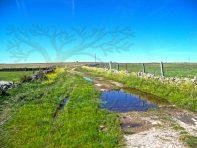 acumulación de agua junto a charca en camino de Tajurmientos