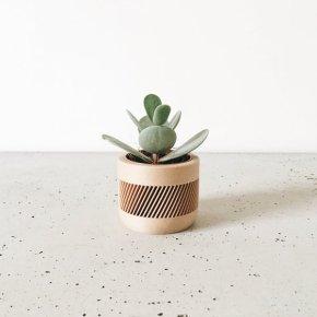 """Pot d""""interieur en bois pour cactus et succulentes"""