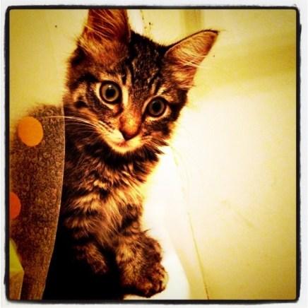 precious baby kitten