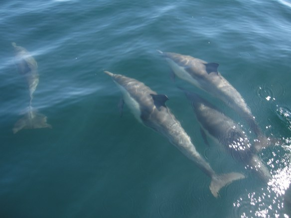 Dolphins having fun with the boat.