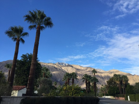 mountain and palm tree view