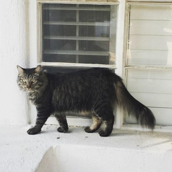 cat walking on window pane
