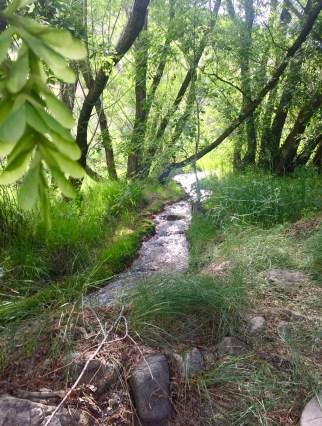 stream through tree lined path