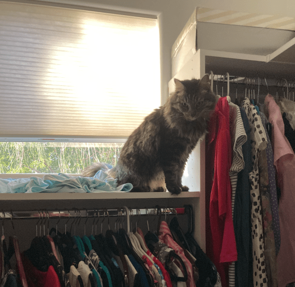 cat on a closet shelf