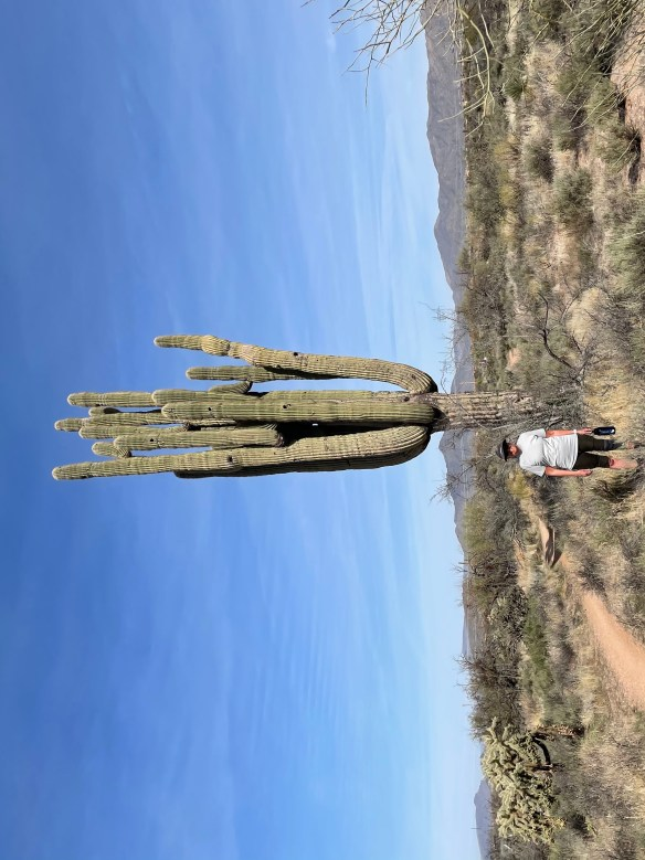 Standing next to saguaro with many arms
