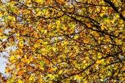 Herbst_Blätter_Feldberg_20141004
