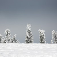 Schneewittchen und die 7 Zwerge | Snow White - Feldberg im Taunus