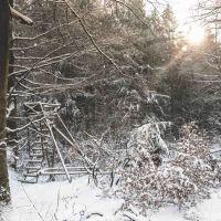Winter im Wald #Großer Feldberg (I)