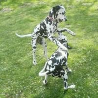 Hunde - Runden - Kuriositäten.... 5