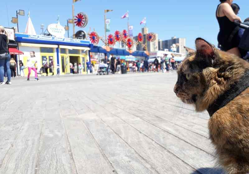 Cat looking out over the boardwalk of Coney Island