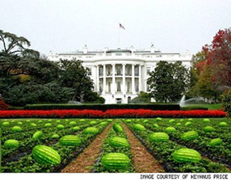 watermelon_white_house2