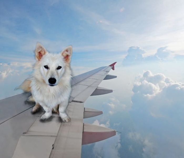 Ending Emotional Support Animals On Planes