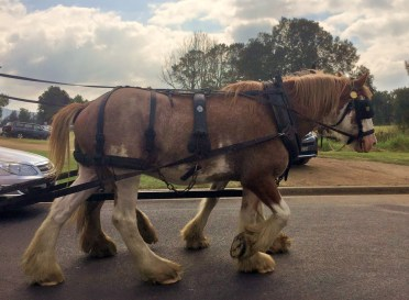Moruya Country Market - clydesdale ride - horses