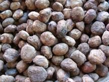 marula nut
