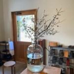 梅の花画像1