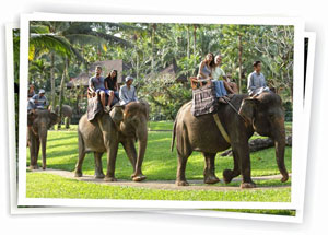 elephant_safari_ride_taro