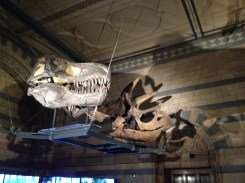 Dinosaur Heads.