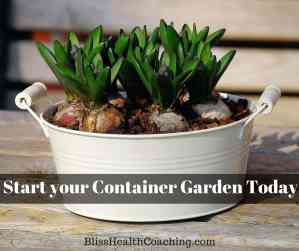 Start your Container Garden Today