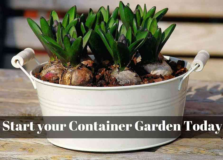 Garden In Containers!