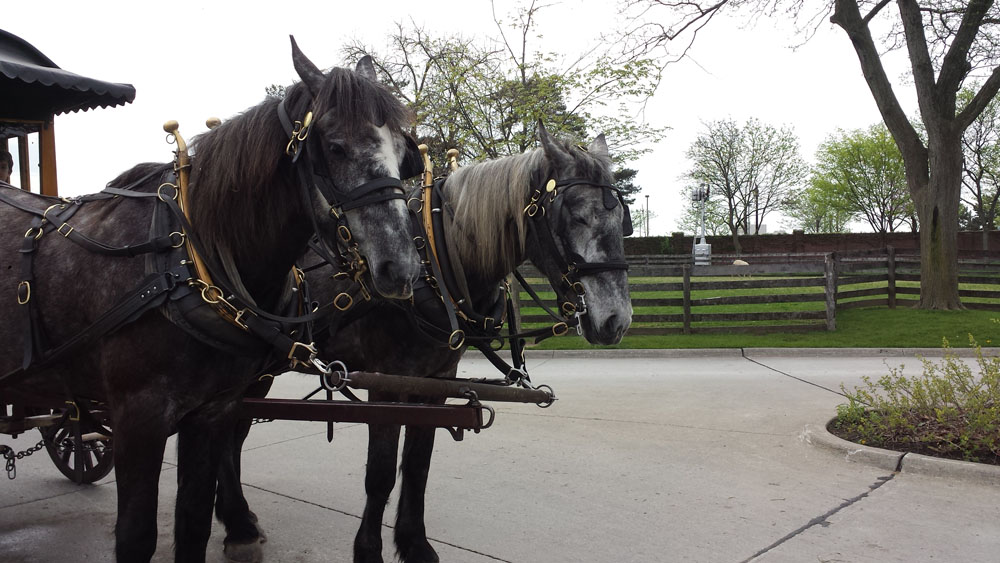 A horse drawn carriage at Greenfield Village!