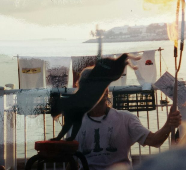 The cat show at the sunset festival in Key West, Florida, early 2000s.