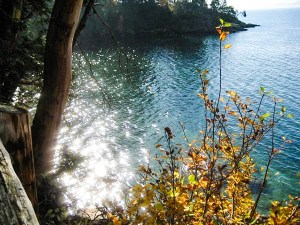 The sun reflects off the water. In the foreround, to the left is a tree and two the right is a wild plant that has yellow and green leaves. In the background, a wooded small cliff jets into the water. No regrets.