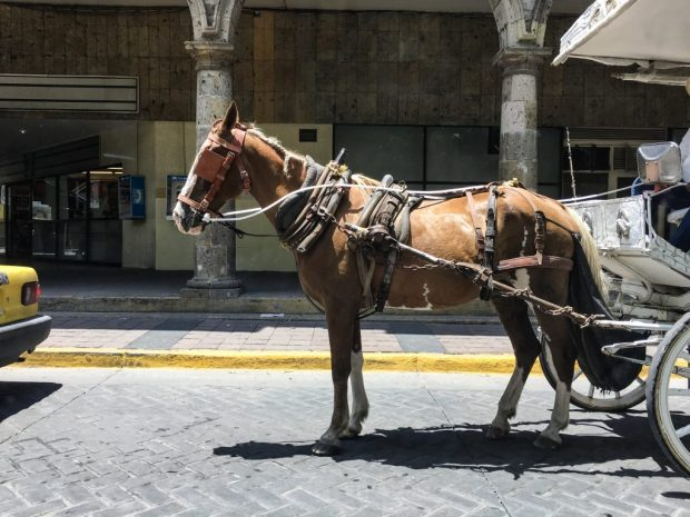 A brown horse attached to a carriage.