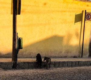 two dogs facing away from the camera, standing half in the street and half on a curb, looking for food, in front of a yellow wall.