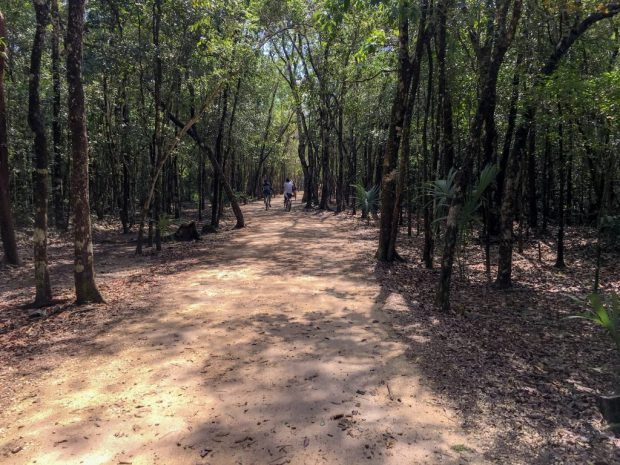 A brown, dry packed soil trail, through trees that are actually part of the jungle at the Coba ruins. There are three bicyclists in the distance.
