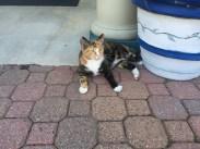 cute stray cat I met