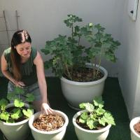 The Homegrown Gardener Dubai