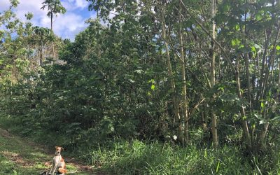 Coffee production to regrow forests