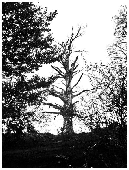 arbre sec