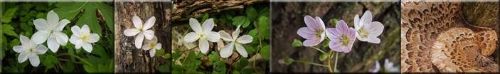 Nature Celebrates Spring