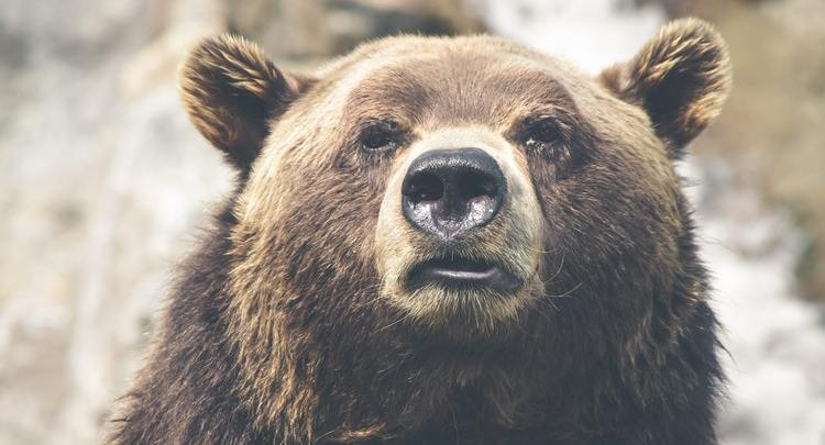 What Does A Crypto Guy Fear More, A Bear Run, Or An Actual Bear?