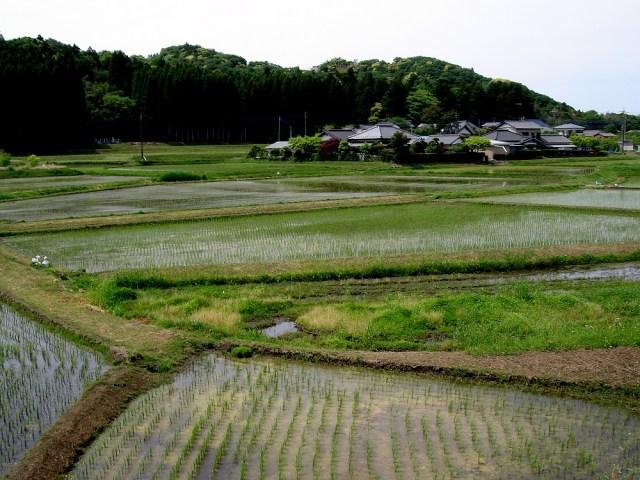 Camps d'arròs al voltant de petits pobles