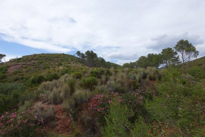 Paratge del Barranc de l'Arquet a Serra (Camp de Túria), dins del parc natural de la Serra Calderona. (14/06/2015, 17:18 h.)