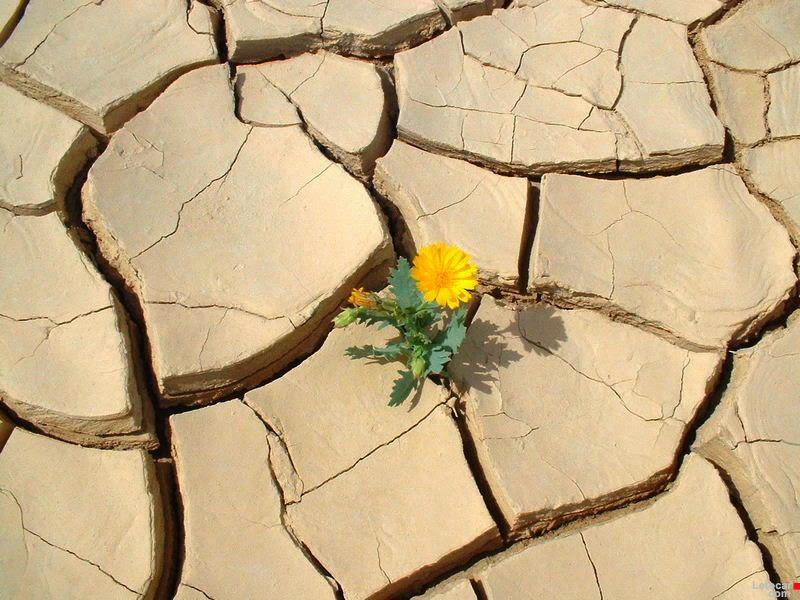 """""""Fragments escollits"""":  La resiliència necessita del dolor."""