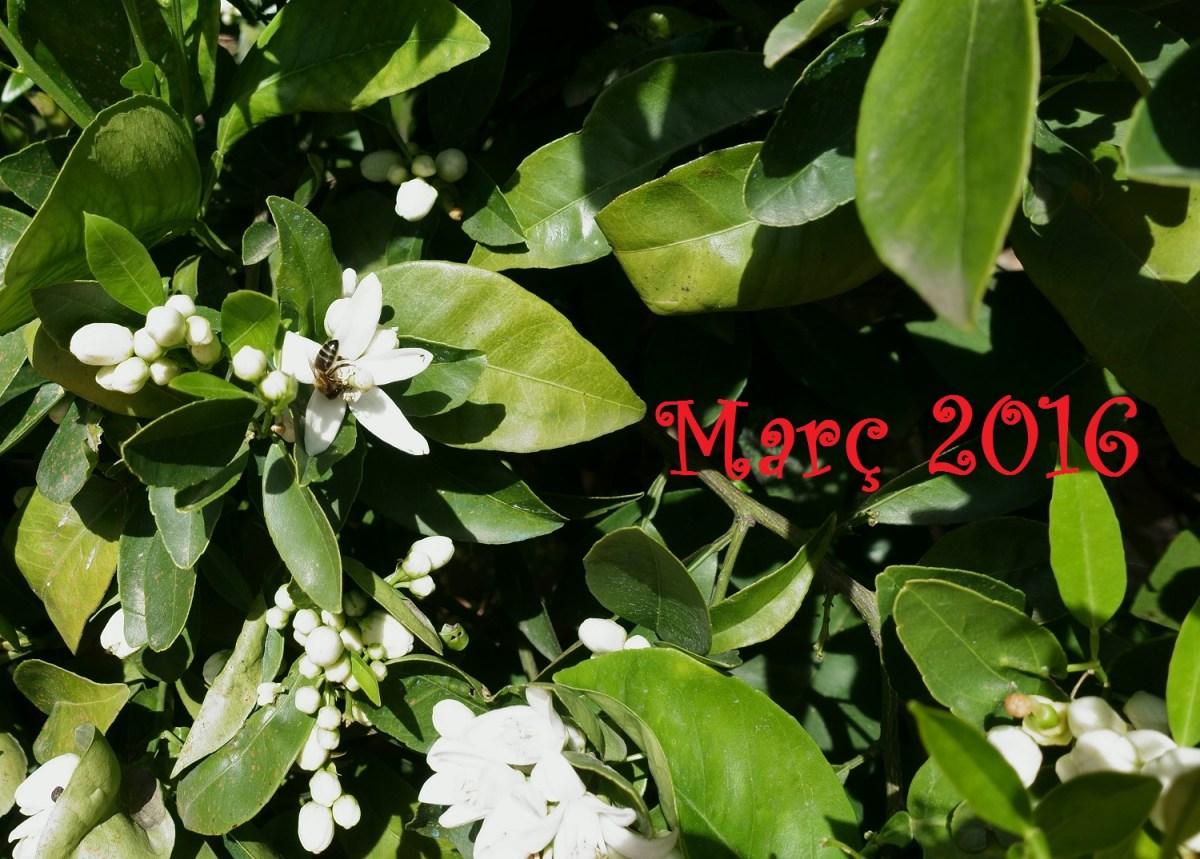 """""""Març, marçador, nit freda i dia amb calor"""" (meteorresum de Març, 2016)."""