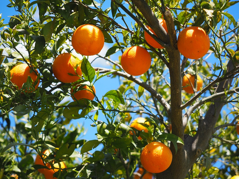 Tuintrend: fruit uit eigen tuin