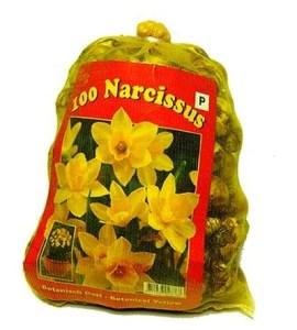 Narcissen Botanisch (XL-Verpakking) - Narcissus